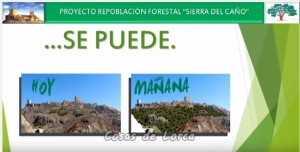 PLANTACION ARBOLES EN SIERRA DEL CAÑO