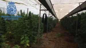 Intervienen más de 9 toneladas de marihuana en Lorca